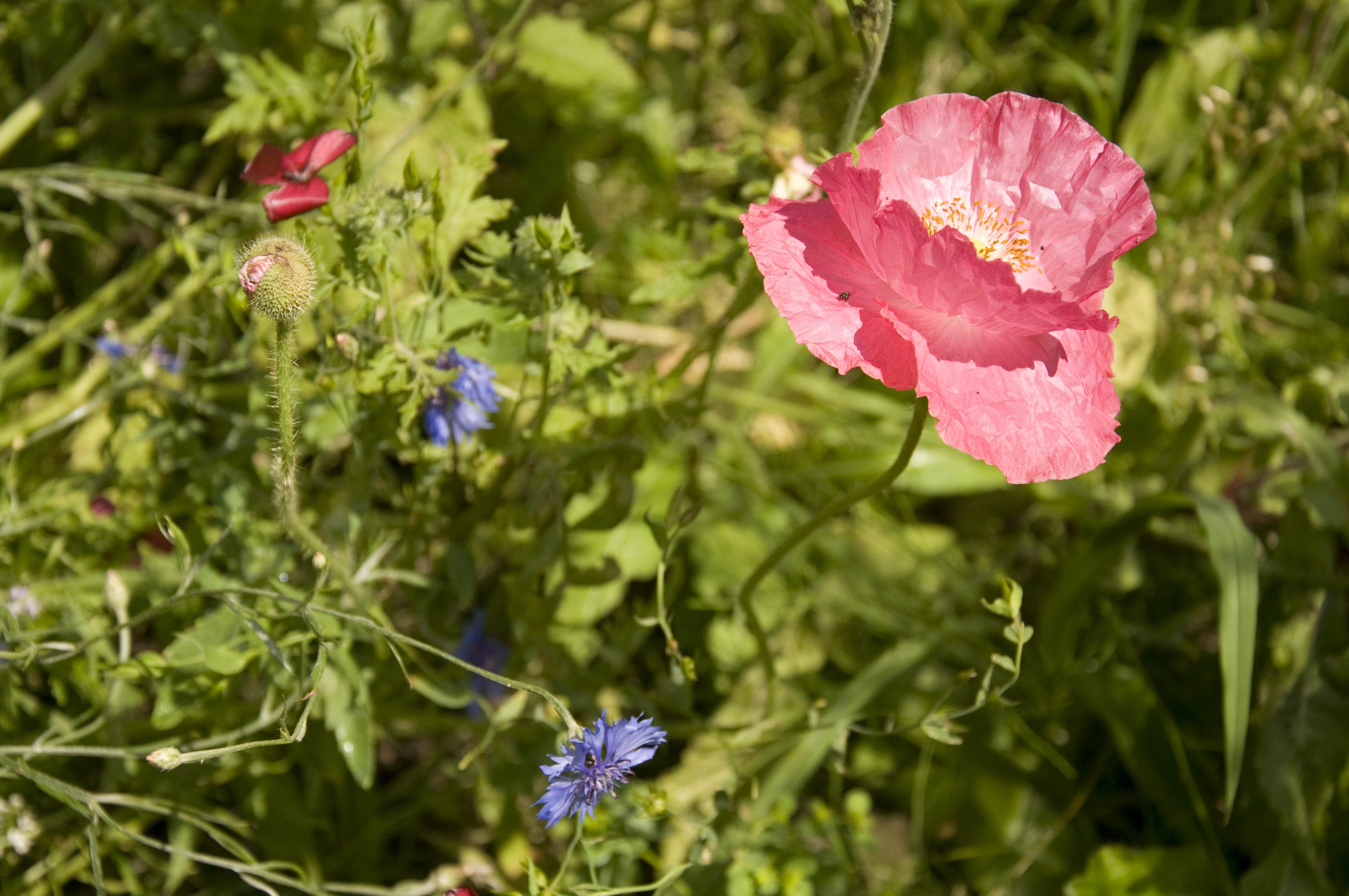 LMünch_HPLG_Garden_2014-6